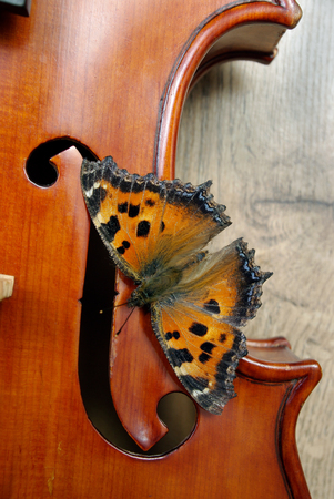 violin and butterfly. butterfly large tortoiseshell. top view.