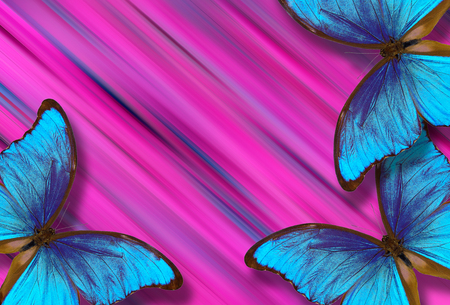 blue morpho butterflies on pink blurred background