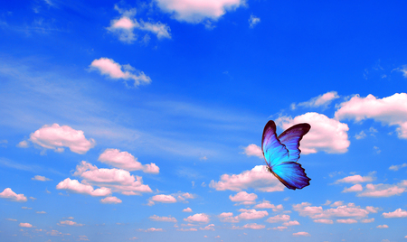 bright butterfly flying in the blue sky with clouds. flying blue butterfly. morpho butterfly copy spaces Фото со стока