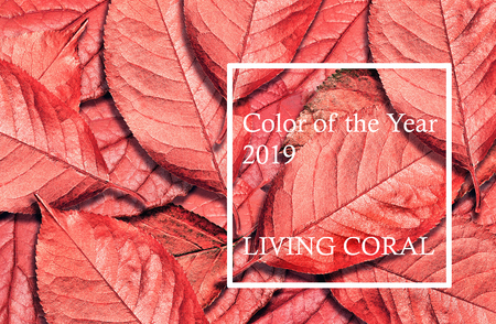 Color of the year 2019 Living Coral. Fallen autumn leaves texture background