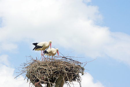storks on the nest. copy spaces. world peace concept Reklamní fotografie - 123818858