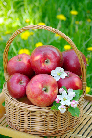 Wicker basket in the garden. Picnic on the grass. Ripe apples and apple blossoms Banco de Imagens