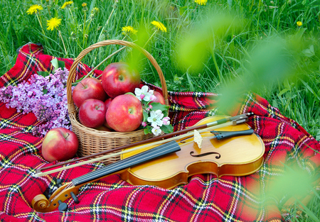 Fresh red apples in a wicker basket in the garden. Picnic on the grass. Ripe apples and violin. Plaid on the grass, apples, violin and spring flowers Reklamní fotografie - 123818872