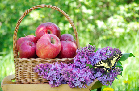 Fresh red apples in a wicker basket in the garden. Picnic on the grass. Ripe apples and spring flowers. Reklamní fotografie - 123818875