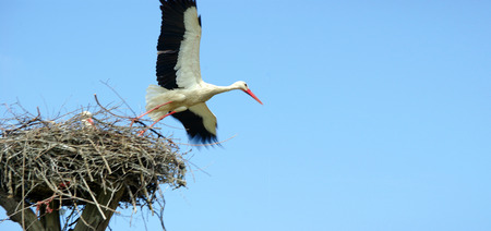storks on the nest. copy spaces. world peace concept