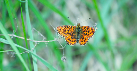 bright red butterfly in the meadow Reklamní fotografie