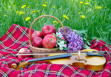 Fresh red apples in a wicker basket in the garden. Picnic on the grass. Ripe apples and violin. Plaid on the grass, apples, violin and spring flowers Reklamní fotografie - 123819100