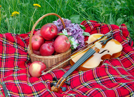 Fresh red apples in a wicker basket in the garden. Picnic on the grass. Ripe apples and violin. Plaid on the grass, apples, violin and spring flowers