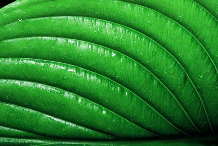 green leaf in drops. close up Reklamní fotografie