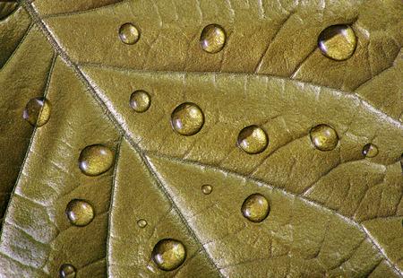 water droplets on the leaf. gold leaf in drops close-up Reklamní fotografie - 123819807