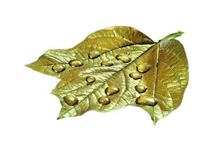 water droplets on the leaf. gold leaf in drops isolated on a white. close-up Reklamní fotografie - 123819808