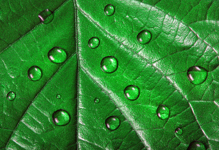 water droplets on the leaf. green leaf in drops close-up Reklamní fotografie - 123819826