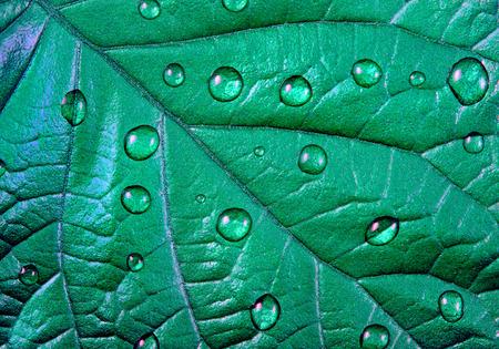 Mint color. Green mint leaf texture close up