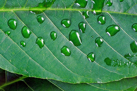 green leaf in water droplets. close up