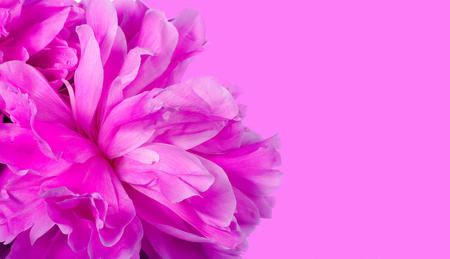 Close up of pink peony on pink background. Reklamní fotografie - 123819902
