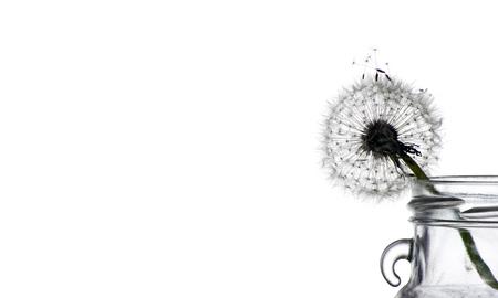 fluffy dandelion on white. close up Reklamní fotografie