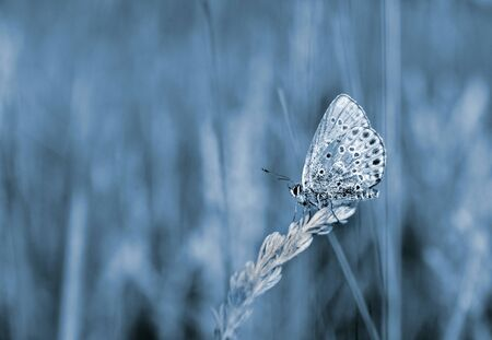 blue natural background. butterfly on the meadow. copy spaces.
