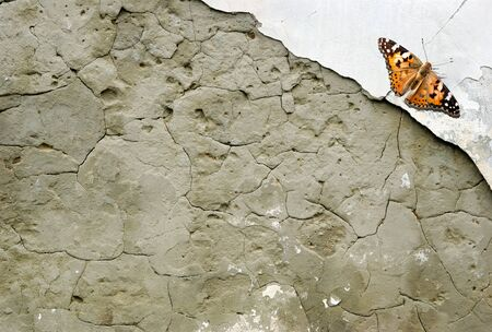 old plastered brick wall. old plaster texture background. copy spaces. beautiful orange butterfly painted lady on an old plastered wall