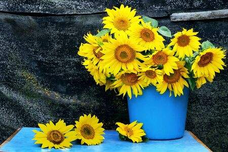 still life with sunflowers. bouquet of sunflowers in a bucket. vintage rural still life with flowers. grunge still life