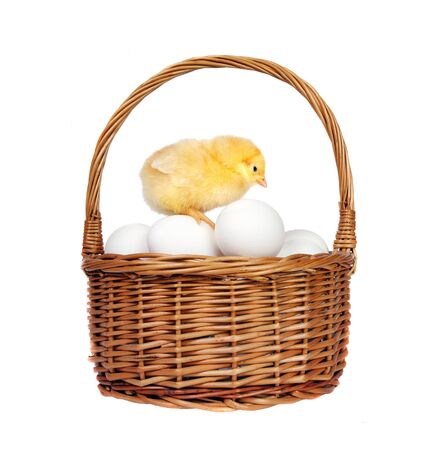 basket of chicken eggs and little chicken isolated on white 版權商用圖片