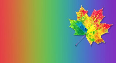 colors of rainbow. color concept in nature. bright colorful autumn maple leaf. copy spaces. 版權商用圖片