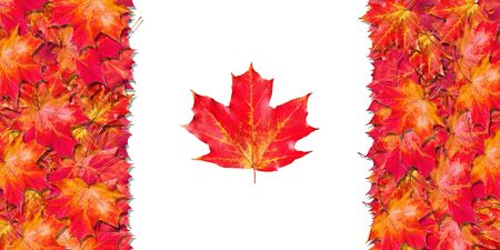 Flag of Canada. Happy Canada Day. Leaves of the flag of Canada. Bright red autumn leaves.