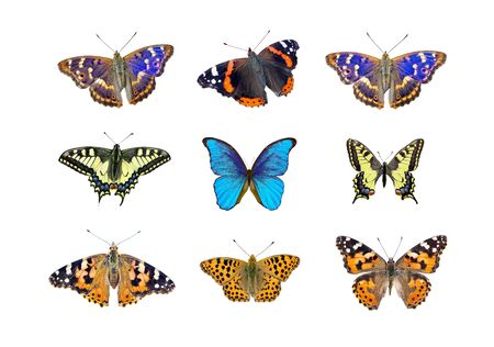 Bright multicolored butterflies isolated on white. collection of butterflies for design. Morpho butterfly, admiral, machaon, painted lady and purple emperor.