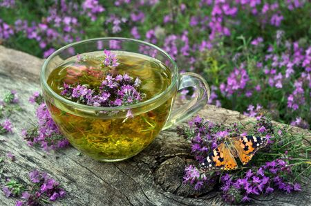 Fresh thyme. Cup of thyme tea on a wooden table. butterfly painted lady sitting on thyme flower. cold and flu remedy Zdjęcie Seryjne