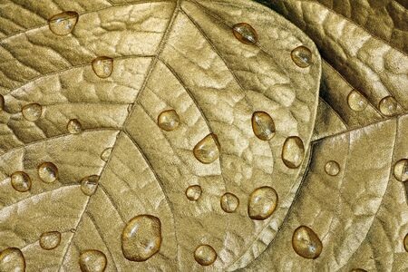 water droplets on leaves. golden leaves in drops texture background. close-up Reklamní fotografie