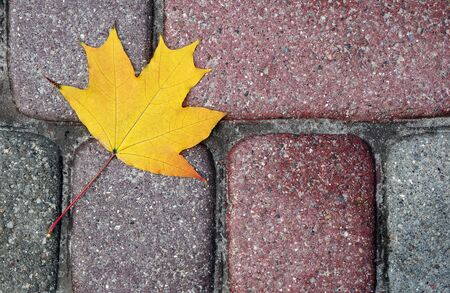 fallen autumn maple leaf on the pavement