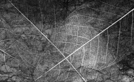 abstract background of autumn leaves. transparent leaves black and white. Stock fotó