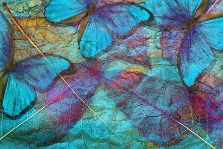 Creative concept of blue background. Abstract natural blue background. Morpho blue butterflies and transparent leaves texture background. Transparent purple leaves. Gold on the blue.