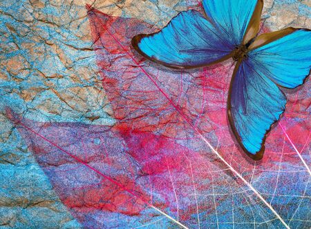 Creative concept of blue background. Abstract natural blue background. Morpho blue butterfly and transparent leaves texture background. Transparent pink leaves. Gold and blue.