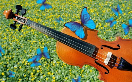 melody concept. violin and spring background. beautiful blue morpho butterflies flying on a sunny lawn. Stock Photo