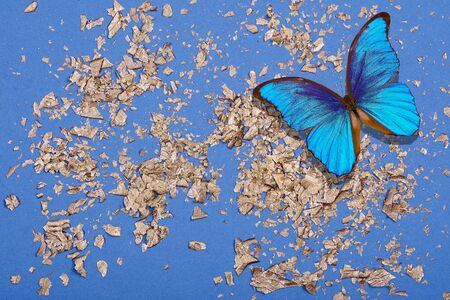 Blue morpho butterflies on a blue and gold background. Golden foil confetti on blue background. Festive colorful bright background. Gold on blue. top view