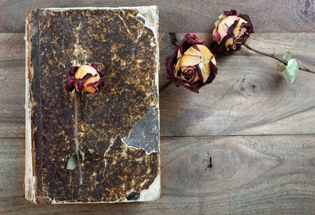 dry rose on an old vintage book. top view