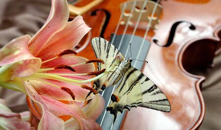 music and nature. violin and flowers. pink lilies and violin. beautiful butterfly on pink lily flowers and violin.