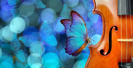 Melody concept. Butterfly sitting on a violin. Violin on a blurry blue background. Blurry lights and blue morpho butterflies. Blurry garland with blue lights and flying butterflies. Fragment of violin Banque d'images