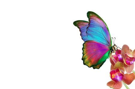 tropical nature. multicolored tropical butterfly. bright tropical morpho butterfly on colorful orchid flowers isolated on white. orchid flowers close-up. Stok Fotoğraf