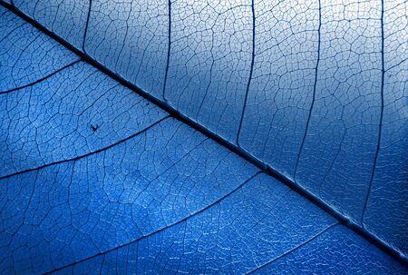Natural blue background. Autumn fallen skeletonized leaves. 2020 trend color. dry fallen leaves close-up.