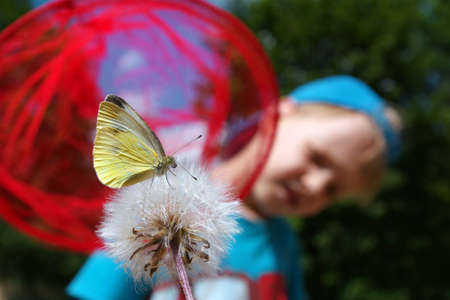 child and butterfly. boy catches a butterfly with a butterfly net. summer fun. summer concept, selective focus