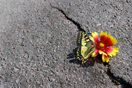 Crack on the asphalt road. A crack in the asphalt and a beautiful flower with butterfly. Copy spaces.