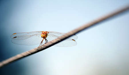 dragonfly sitting on a steel cable. copy space