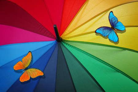 colors of rainbow. multicolored umbrella and bright tropical morpho batterflies close-up. rainbow umbrella
