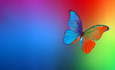 colors of rainbow. colorful multicolored morpho butterfly on blurred colored background
