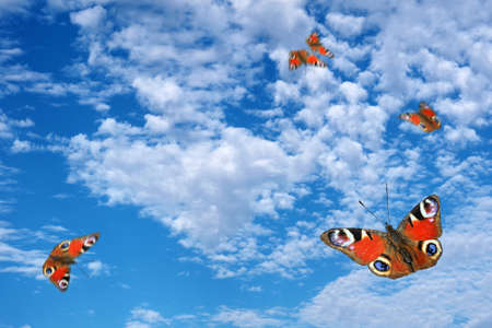bright colorful peacock butterflies flying in the blue sky with clouds. copy space