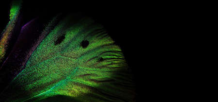 bright colorful wing of a tropical butterfly on black copy space. golden butterfly wing close up. green in nature Stockfoto