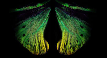 bright colorful wings of a tropical butterfly on black copy space. golden butterfly wings close up. green in nature
