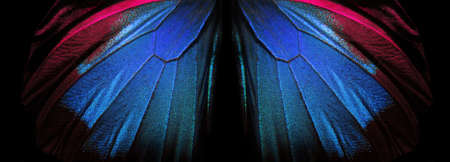 Wings of a butterfly Ulysses. Wings of a butterfly texture background. Closeup. Selective focus Stockfoto