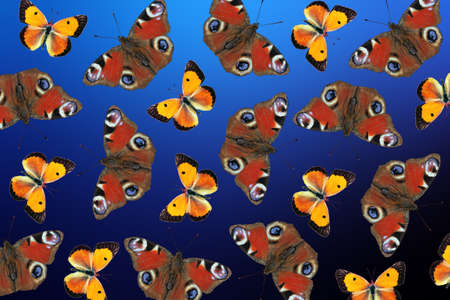 Pattern of red and orange flying butterflies on a blurred blue background. Colorful butterflies ornament. Summer concept.